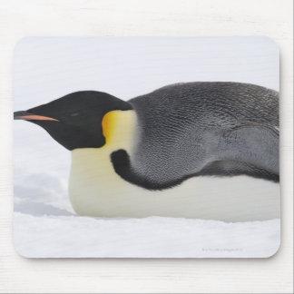 Pingüino de emperador, isla de la colina de la nie alfombrillas de raton