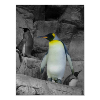 Pingüino de emperador poster