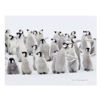 Pingüino de emperador postal