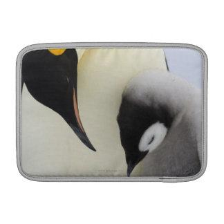 Pingüino de emperador que mira el polluelo funda  MacBook
