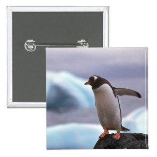 Pingüino de Gentoo Pin