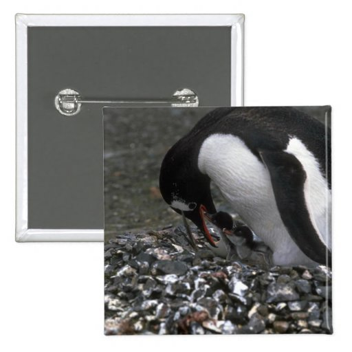 Pingüino de Gentoo - adulto con los pequeños Chapa Cuadrada 5 Cm