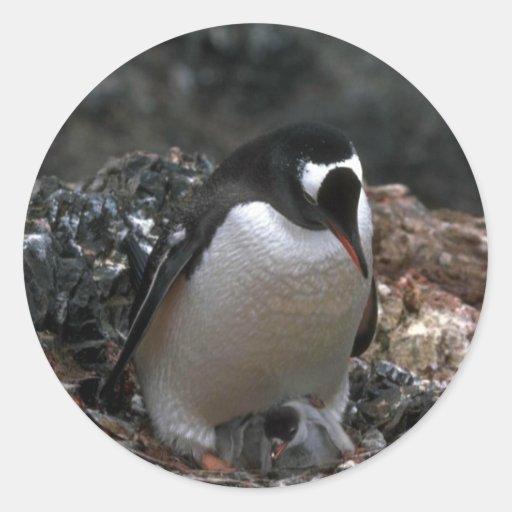 Pingüino de Gentoo - adulto con los pequeños Pegatina Redonda