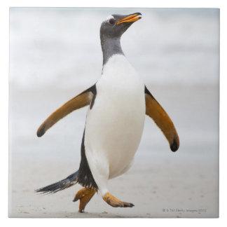 Pingüino de Gentoo Azulejo Cuadrado Grande