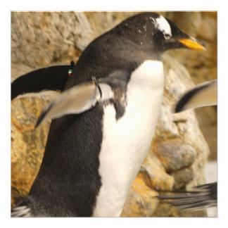 Pingüino de Gentoo Anuncios