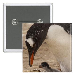 Pingüino de Gentoo (Pygoscelis Papua) a de aliment Pin Cuadrada 5 Cm