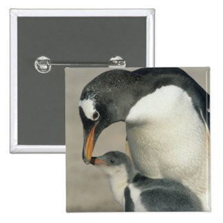 Pingüino de Gentoo, (Pygoscelis Papua), adulto Pin Cuadrado