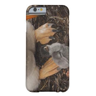 Pingüino de Gentoo (Pygoscelis Papua) con el Funda Para iPhone 6 Barely There