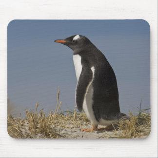 Pingüino de Gentoo (Pygoscelis Papua) en Keppel Tapetes De Ratones
