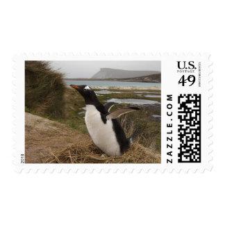 Pingüino de Gentoo (Pygoscelis Papua) en una Estampilla