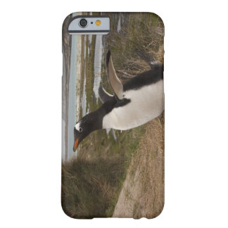 Pingüino de Gentoo (Pygoscelis Papua) en una Funda De iPhone 6 Barely There