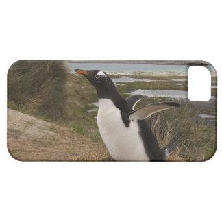 Pingüino de Gentoo (Pygoscelis Papua) en una iPhone 5 Funda