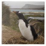 Pingüino de Gentoo (Pygoscelis Papua) en una jerar Azulejo Cuadrado Grande