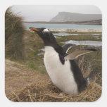 Pingüino de Gentoo (Pygoscelis Papua) en una Pegatina Cuadrada