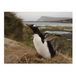 Pingüino de Gentoo (Pygoscelis Papua) en una Postal