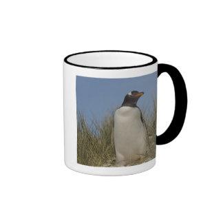 Pingüino de Gentoo (Pygoscelis Papua), Keppel Taza De Dos Colores