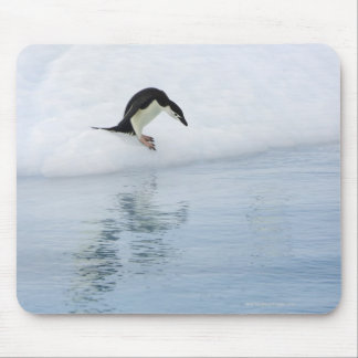 Pingüino de Gentoo (Pygoscelis Papua) Tapete De Raton