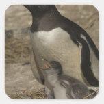 Pingüino de Gentoo (Pygoscelis Papua) y polluelos Pegatina Cuadrada