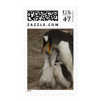 Pingüino de Gentoo (Pygoscelis Papua) y polluelos. Sellos
