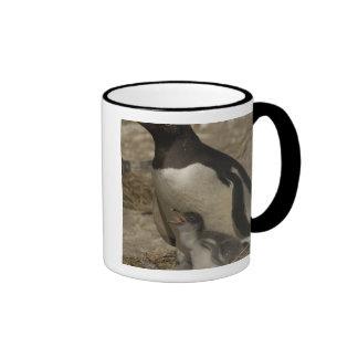 Pingüino de Gentoo Pygoscelis Papua y polluelos Taza De Café