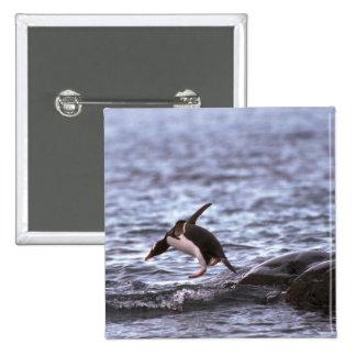 Pingüino de Gentoo que salta en el agua