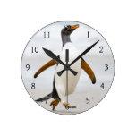 Pingüino de Gentoo Relojes