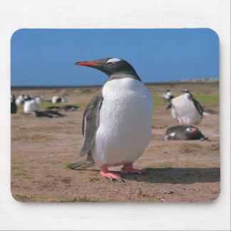 Pingüino de Gentoo Alfombrillas De Raton