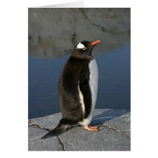 Pingüino de Gentoo Tarjeta De Felicitación