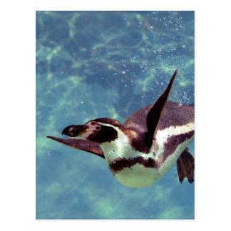 Pingüino de Humboldt debajo del agua Tarjeta Postal