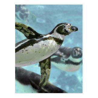 Pingüino de Humboldt debajo del agua Tarjetas Postales