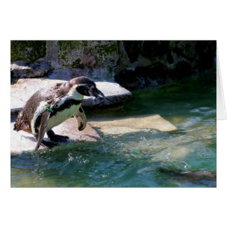 Pingüino de Humboldt Tarjeta