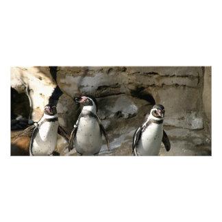 Pingüino de Humboldt Tarjeta Publicitaria