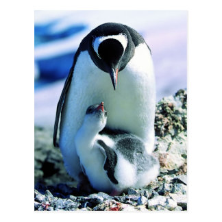 Pingüino de la madre y del bebé tarjeta postal