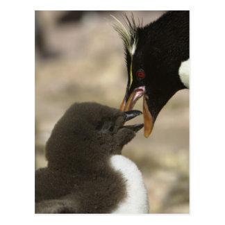 pingüino de la Roca-tolva, chrysocome del Eudyptes Tarjeta Postal