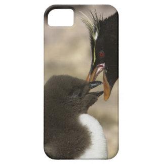 pingüino de la Roca-tolva, chrysocome del iPhone 5 Fundas