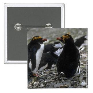 Pingüino de los macarrones - par en la jerarquía