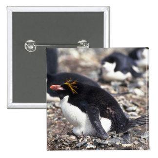 Pingüino de los macarrones que se sienta en el pins