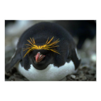 Pingüino de los macarrones que se sienta en el hue poster