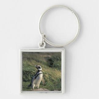 Pingüino de Magellanic (magellanicus del Spheniscu Llavero Personalizado