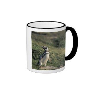 Pingüino de Magellanic magellanicus del Spheniscu Tazas De Café