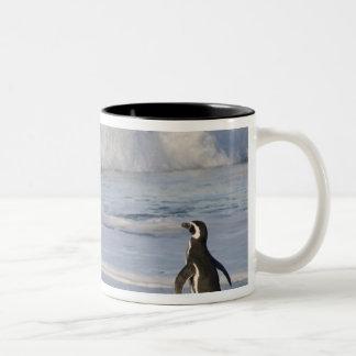 Pingüino de Magellanic magellanicus del spheniscu Tazas