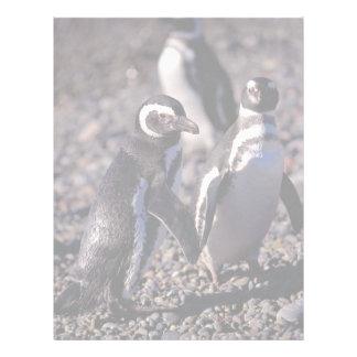Pingüino de Magellanic Membrete Personalizado