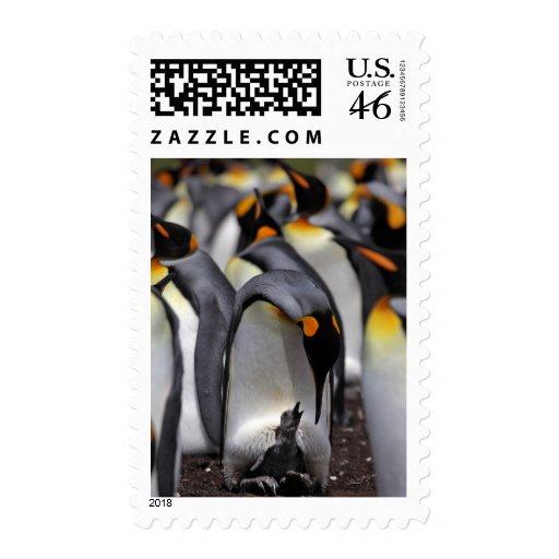 Pingüino de rey con el polluelo