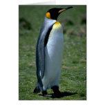 Pingüino de rey, Islas Malvinas Felicitaciones