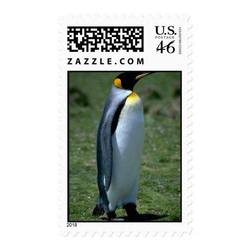 Pingüino de rey, Islas Malvinas Franqueo