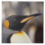 Pingüino de rey (patagonicus del Aptenodytes) Azulejo Cuadrado Grande