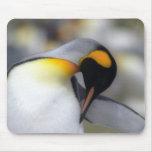 Pingüino de rey tapetes de raton