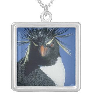 Pingüino de Rockhopper (chrysocome del Eudyptes) Collar Personalizado