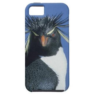 Pingüino de Rockhopper (chrysocome del Eudyptes) Funda Para iPhone SE/5/5s