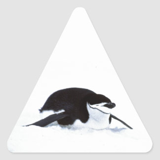 Pingüino de Tobogganing Pegatina Triangular